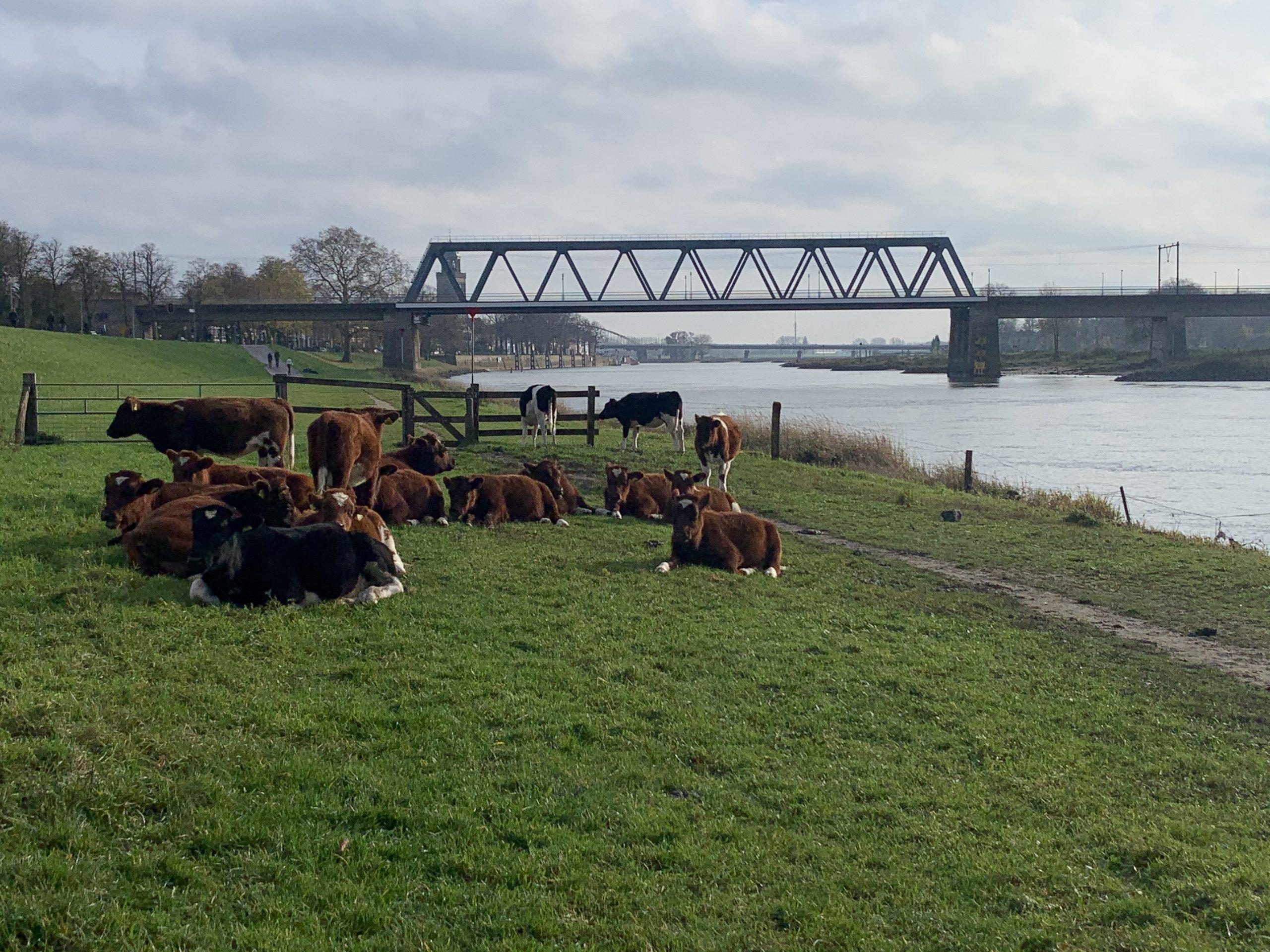 Wandelen: Olst-Deventer (16,5km)